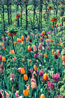 Tulips at Keukenhof | by Gwendolyn Stansbury