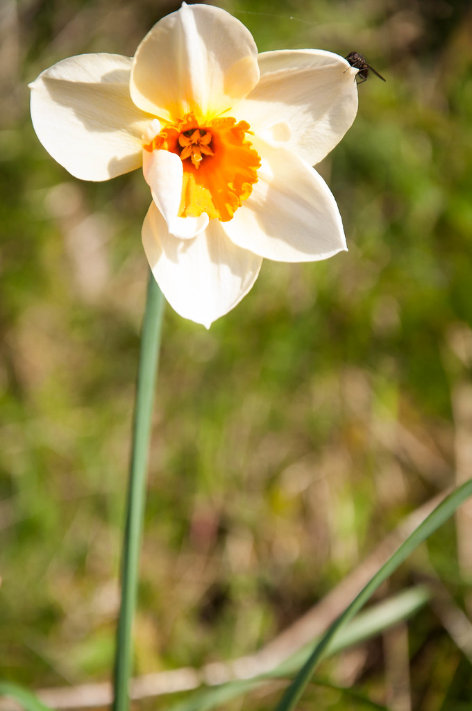 Pretty white flower rachelh908 flickr pretty white flower by rachelh908 pretty white flower by rachelh908 mightylinksfo