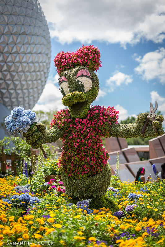 Daisy Topiary at EPCOT