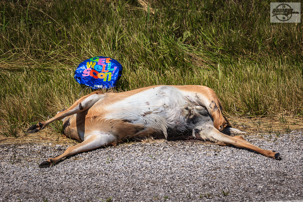Get Well Soon Deer