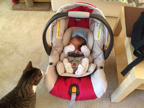 Baby Ezra comes home