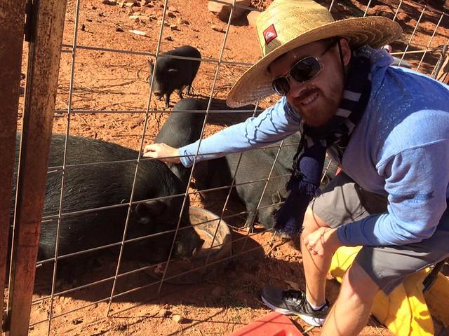petting pigs