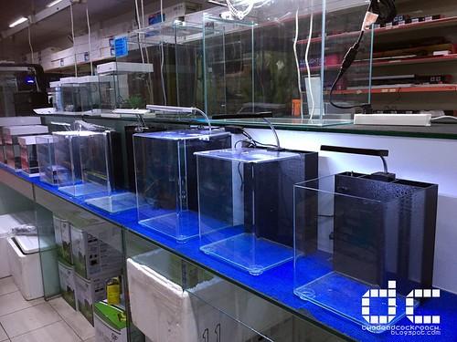 aquarium, guppy, guppy tank, nano, nano space, nano tank, ocean free, qian hu, qianhu, review