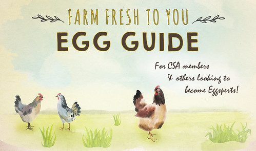 egg-guide-header