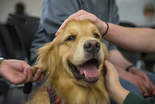 Therapy_Dogs_Spring_2015_TS23042915 | by Ohio University Libraries