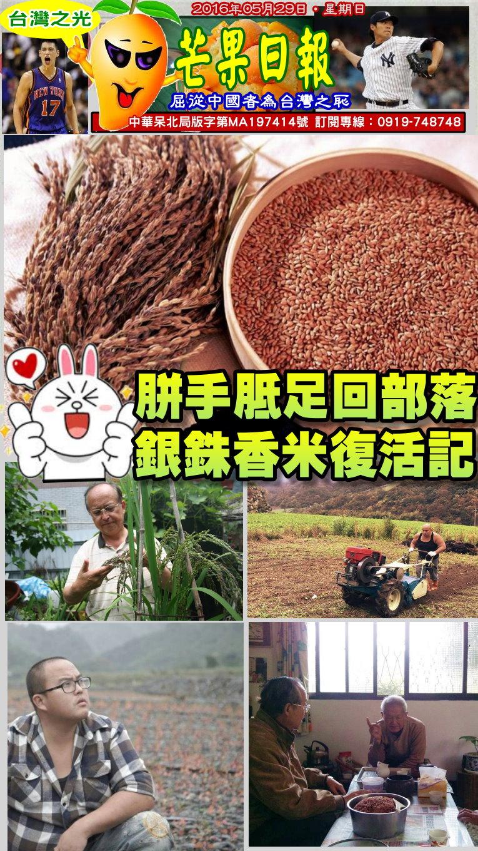 160607芒果日報--台灣之光--胼手胝足回部落,種回失傳故鄉米