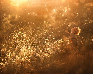 dandelion feeling.. | by aleshurik