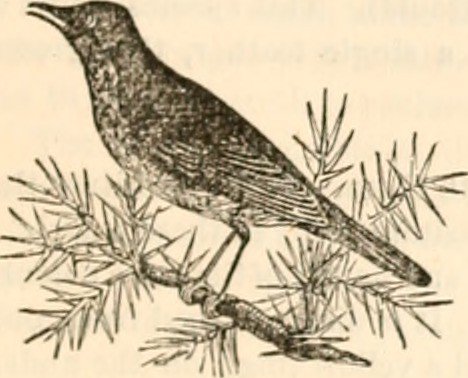 Forming Image From Page 266 Of The Animal Kingdom Arranged After Its Organization