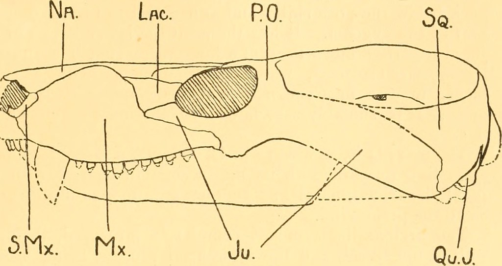 image from page 546 of the annals and magazine of natural history zoology