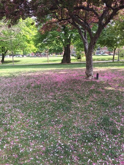 A Carpet of Petals