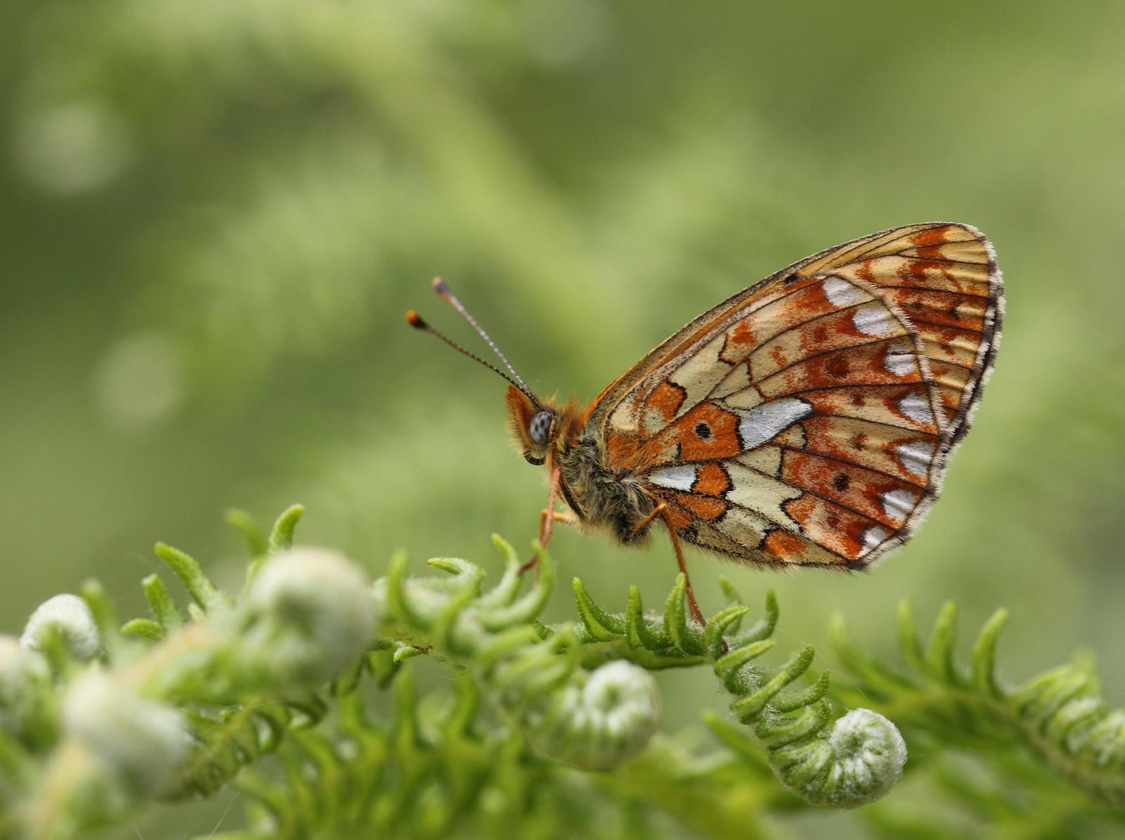 butterfliesandrooks0020