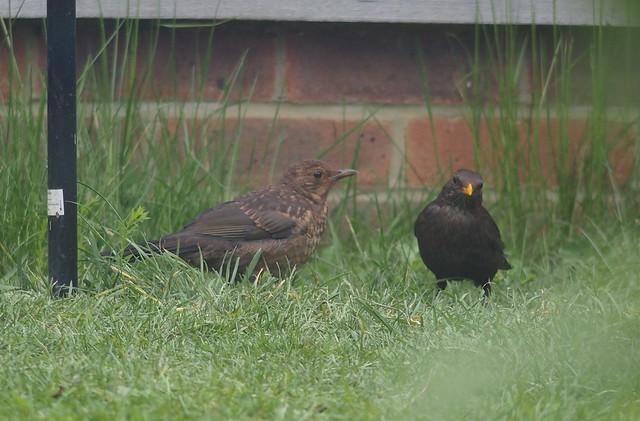 Bringing up fledglings