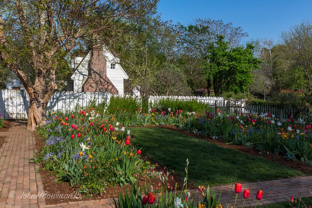 ... A Williamsburg Garden Favorite | By John H Bowman