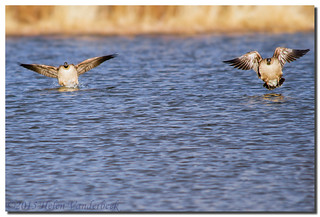 ...... And Splashdown | by HelenV18