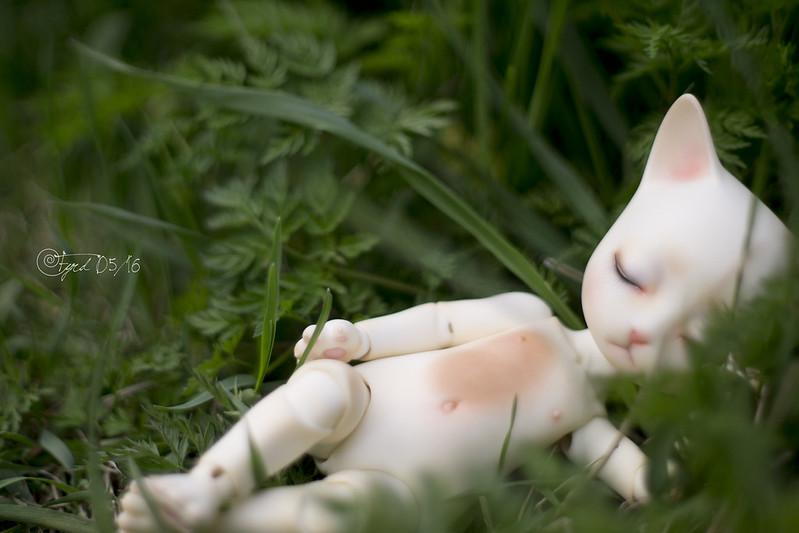 Grassland Kitty 03