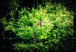 Swamp Rabbit Railroad Switch 2