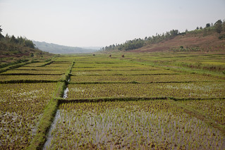 Rice paddy | by World Bank Photo Collection