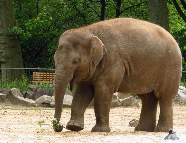 Zoo Berlin 27.05.2016   07
