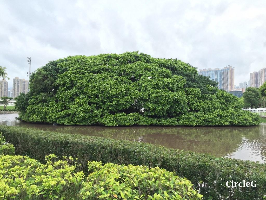 CIRCLEG 遊記 沙田 火炭 彭福公園公園 (29)