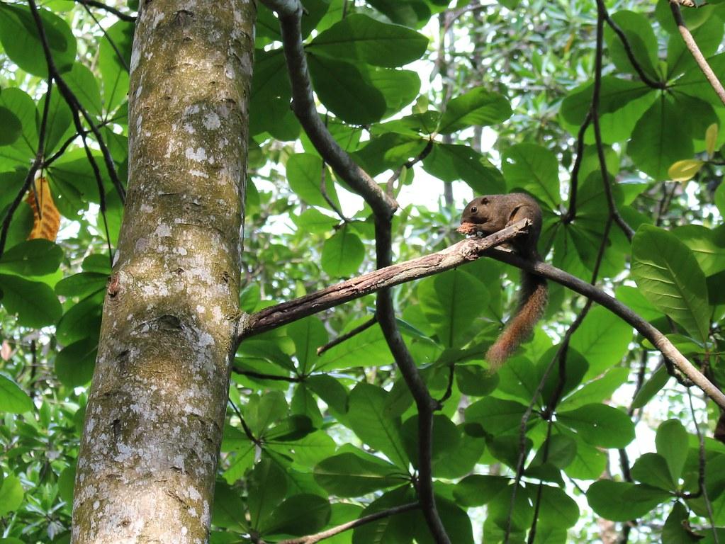 Mangrove forest, Pasir Ris Park, Singapore