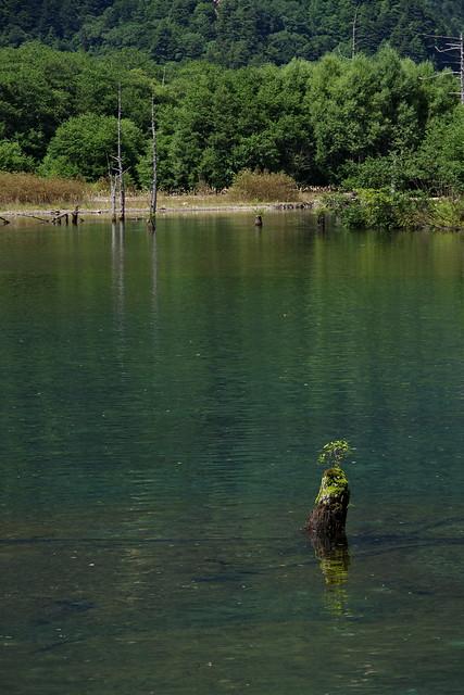 Taisho-ike pond Kamikochi 2016 summer 09