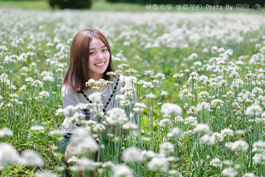 2016.09.11~桃園大溪韭菜花海