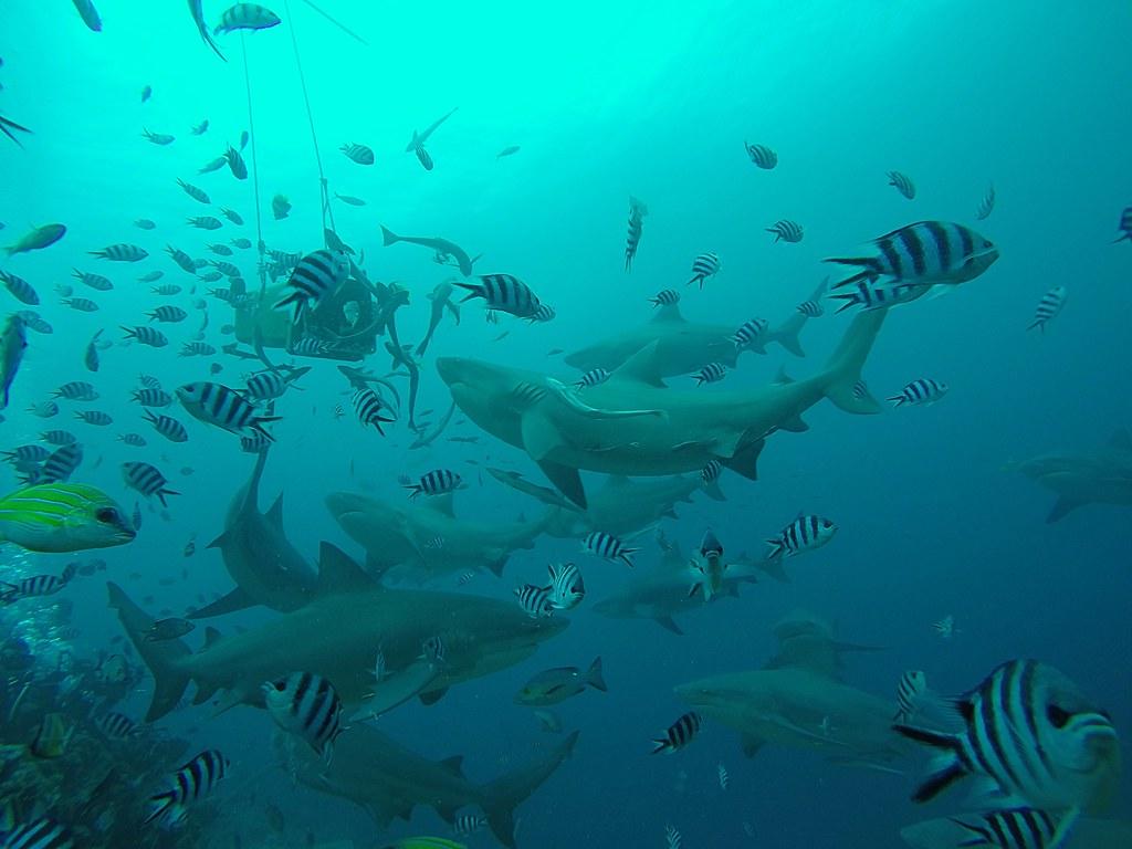 Aqua Feed Market in 360MarketUpdates.com