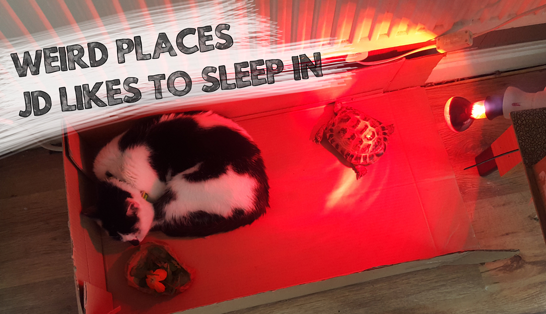 Weird Places the Cat Likes to Sleep #1 | lifeofkitty.co.uk