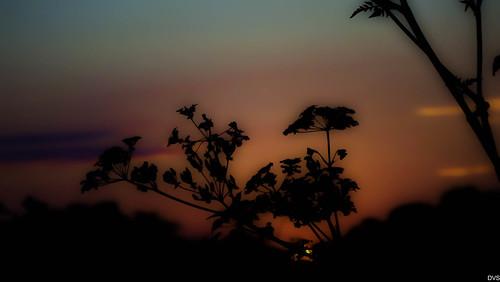 Last night's sunset.