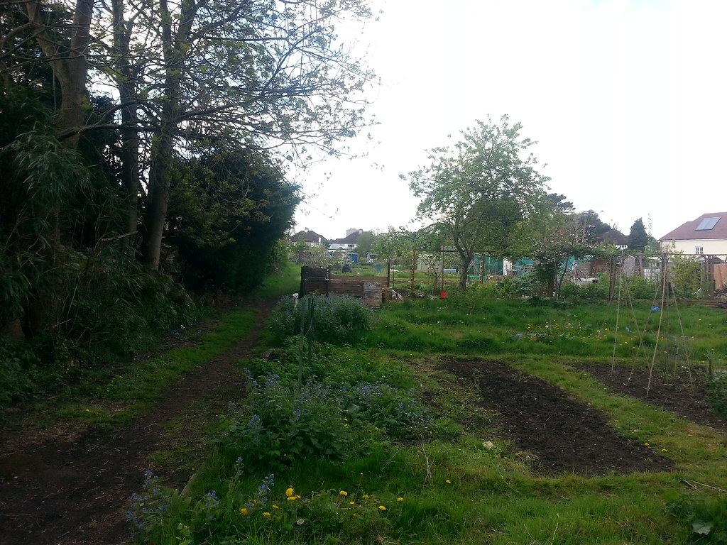 Looking Across The Allotments