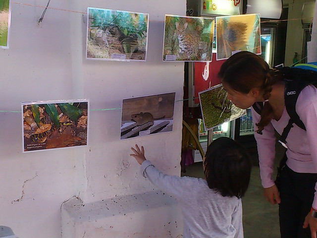 'Vertebrates of Pulau Ubin' photo exhibition by Nature Society (Singapore) for Pesta Ubin