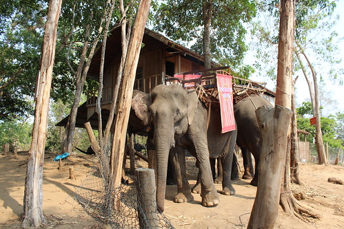 Elephants used for tourism