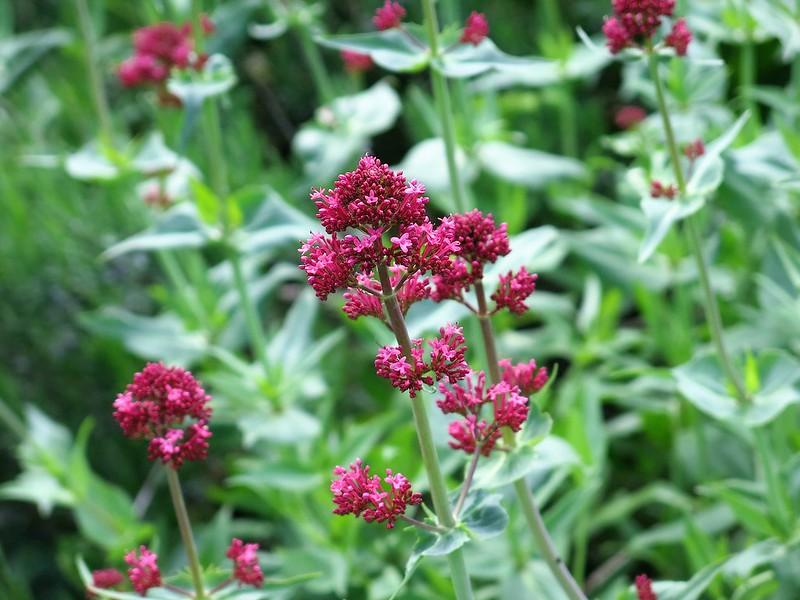 Flowers Wyss Garten Center (4)