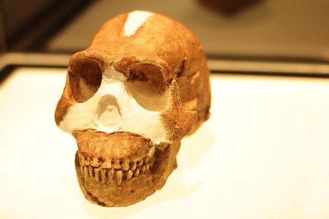 Homo naledi 2015