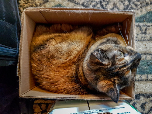 Polly in a Box | by Stephen Downes