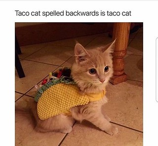 Best Funny Quotes : 27 Taco Memes for Taco Tuesday or Any ...