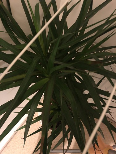 2019 (Day 42 - 11th Feb): Indoor foliage | by tawalker