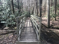 The Replacement for the Slipperiest Bridge in the Forest