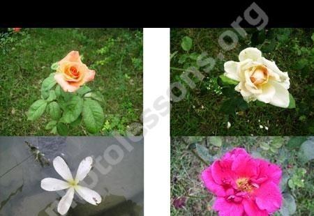 Фоны для фотошопа - Цветы