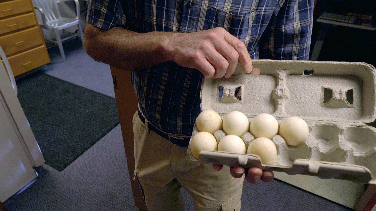 Eggs, United States