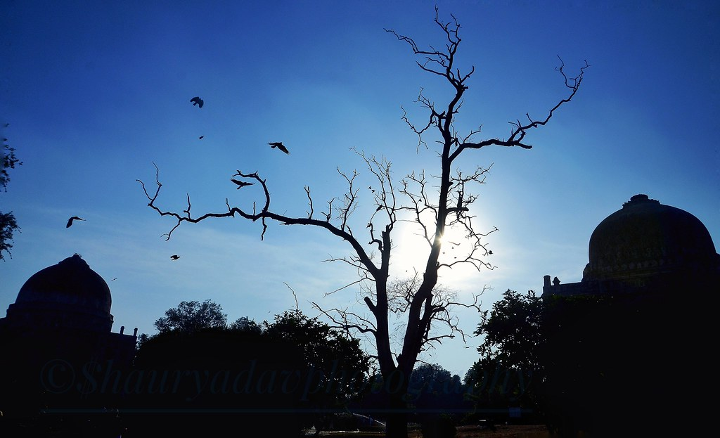 Beautiful birds chirping around a dry tree which makes it