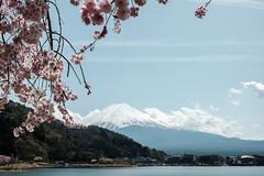 20180413 Mount Fuji, Sakura 2