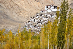 Ladakh in Autumn