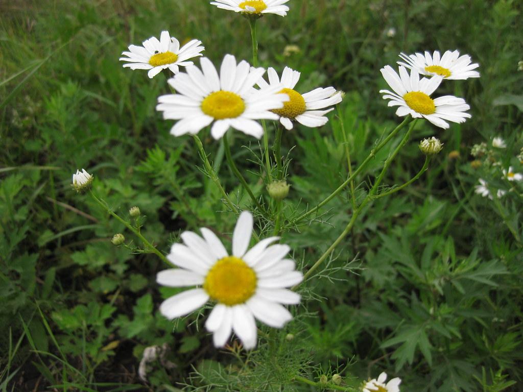 Природа, цветы, остальное