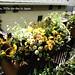 my little garden in japan 2012 3