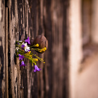 peeling paint and keyhole posy | by penwren