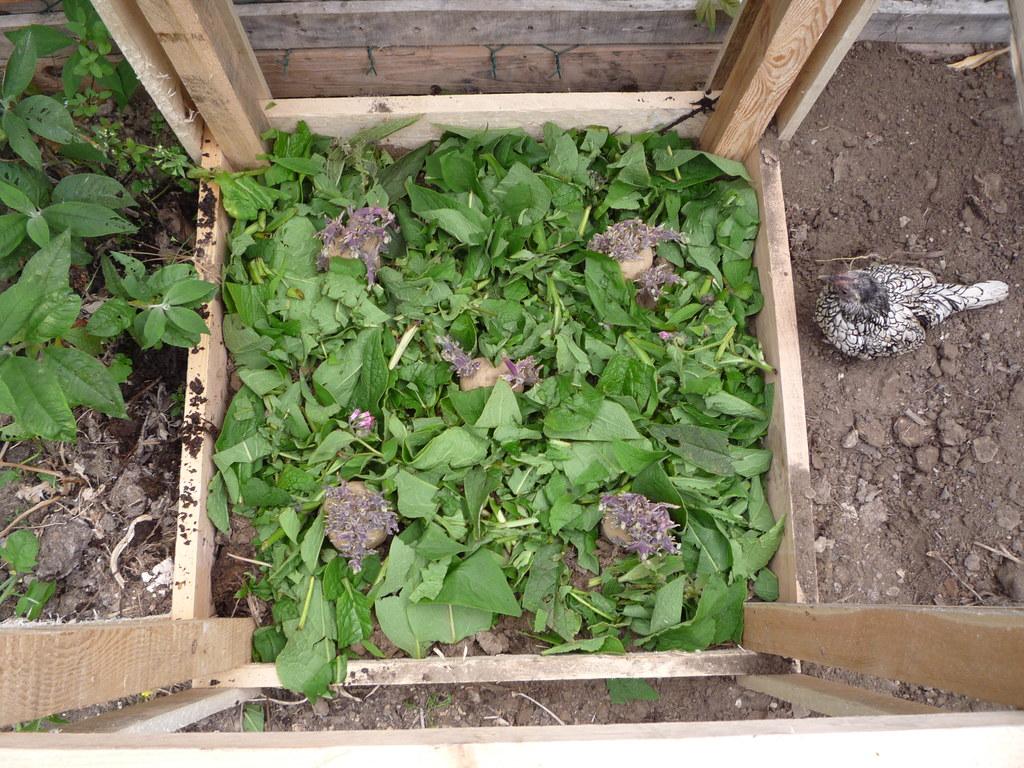 Pallet Wood Potato Tower Experiment Increasing Organic Ve