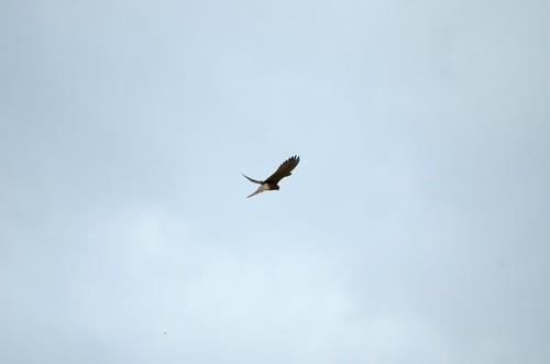 0218 Vogel in der Luft
