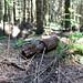 Argonne forest, German Granatenwerfer bomb