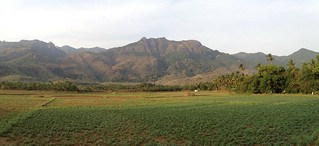 Paddy field panorama | by Jillako